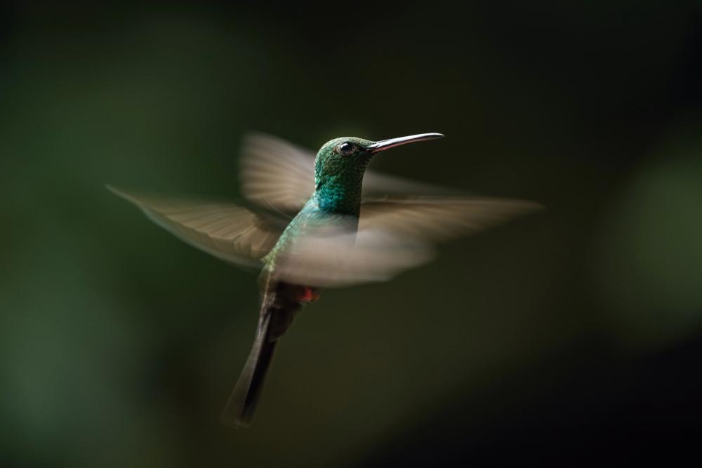 Tidewater Green, from Shutterstock