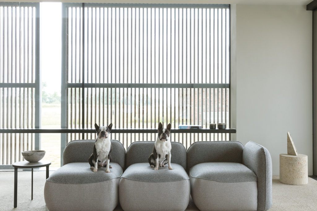 French bulldogs interior upholstery