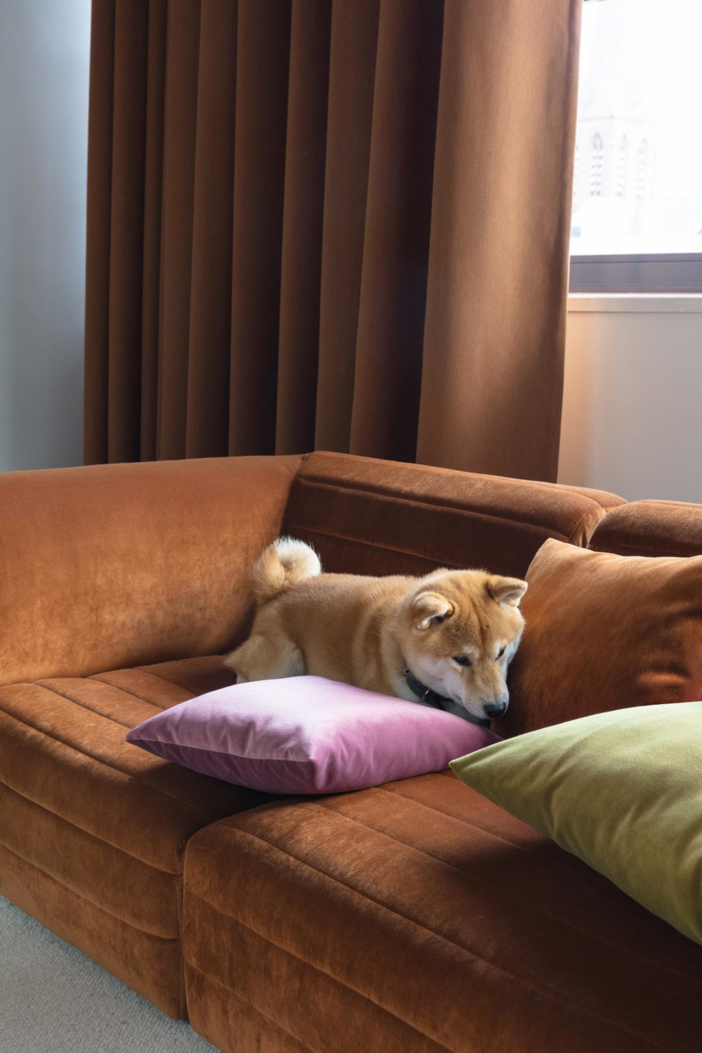 Akita on a couch upholstered with FibreGuard Lech